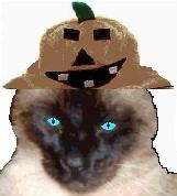 pet costumes artimus